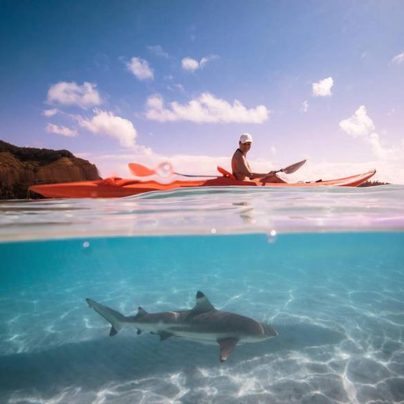 Kayaking with sharks in French Polynesia | Photography by ©Matthew Nitschke