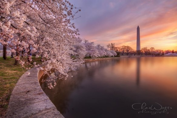 spring-in-washington-dc-photography-by-chez-watts