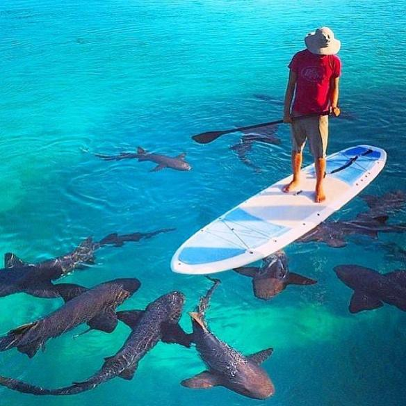 paddle-boarding-with-a-few-welcome-guests-photography-by-tony-trajkovich