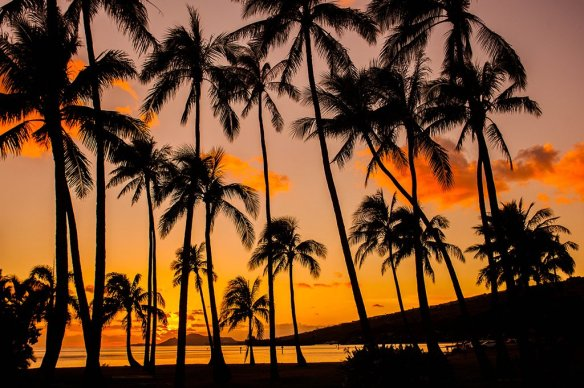 palm-tree-sunset-hawaii-photography-by-anthonyquintano