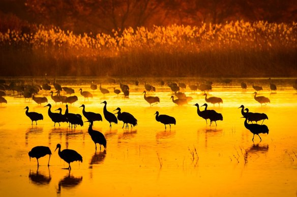 sandhills-greet-morning-sun-photography-by-howardignatius