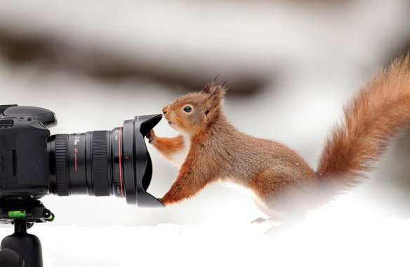 squirrel-and-a-camera-photography-by-giedrius-stakauskas