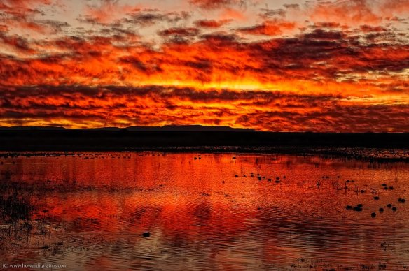 sunrise-at-bosque-del-apache-photography-by-howardignatius