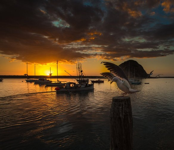 sunset-seagull-photography-by-howardignatius