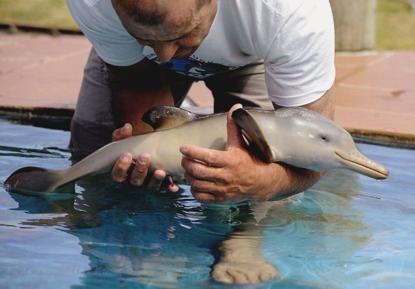 ten-day-old-orphan-dolphin-photography-by-miguel-rojo