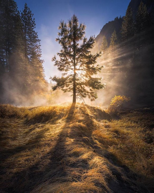 a-very-misty-morning-in-yosemite-national-park-photography-by-michael-shainblum