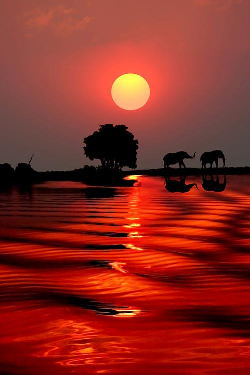 elephants-at-sunset-in-botswana-photography-by-michael-sheridan