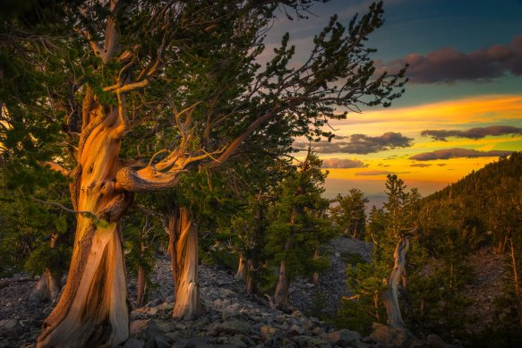 golden-sunset-at-great-basin-national-park-nevada-photography-by-thomas-sikora
