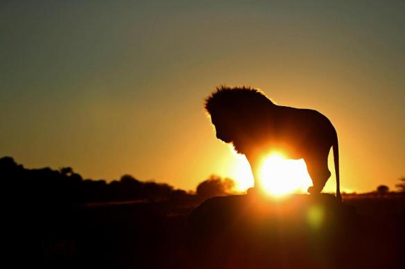 the-king-at-sunrise-south-africa-photography-by-sandra-metzbauer