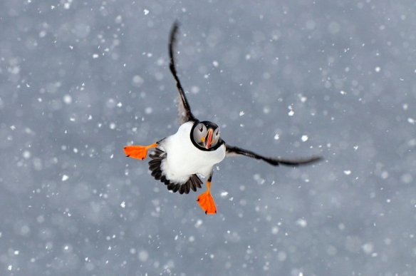 fly-in-snowstorm-photography-by-focus-junior