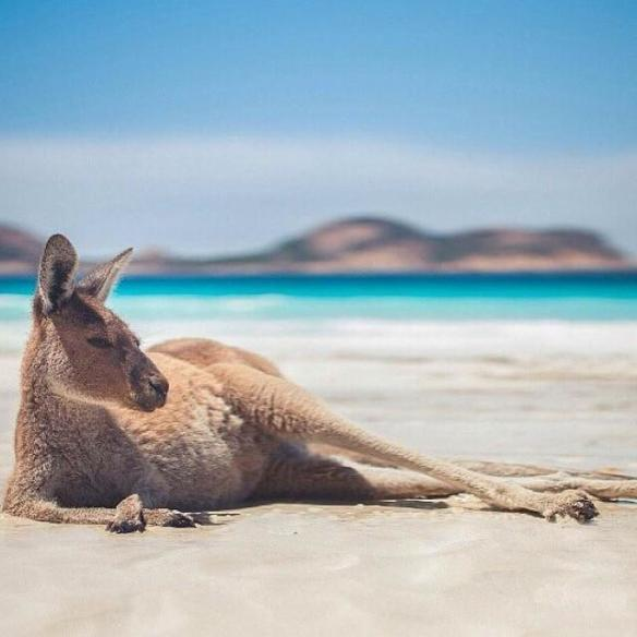 kangaroo-chilling-on-the-beach-australia-photography-by-thibault-bunoust