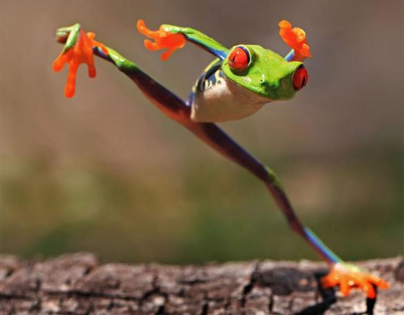 kung-fu-frog-photography-by-shikhei-goh