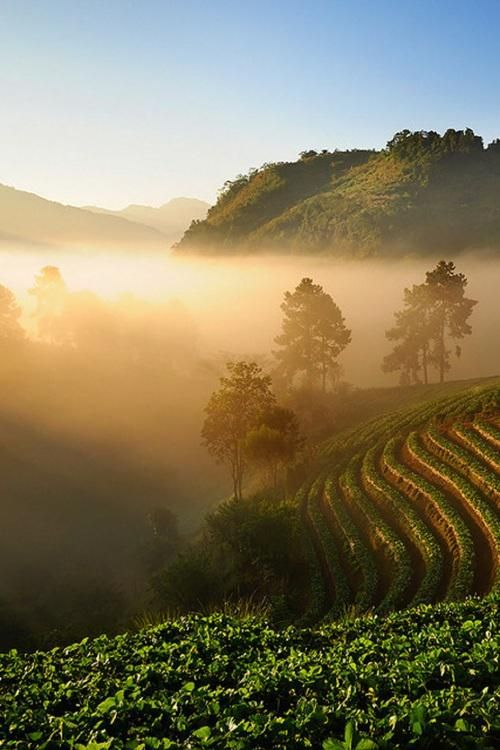 misty-morning-in-chiang-mai-thailand-photography-by-wanasapong-jainpol