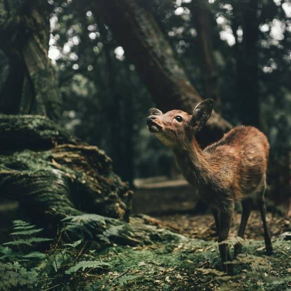 taking-in-the-local-scenery-at-nara-japan-photography-by-fursty