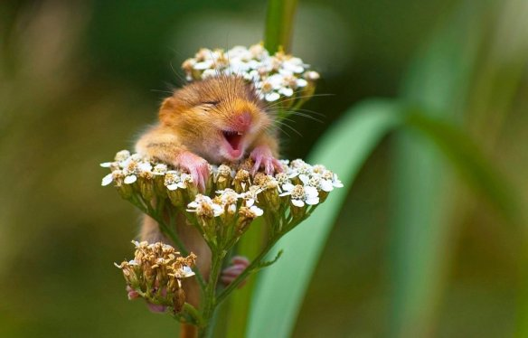 the-happiest-mouse-in-the-world-photography-by-andrea-zampatti