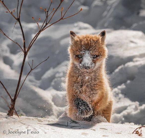 enjoying-winter-photography-by-jocelyne-feizo
