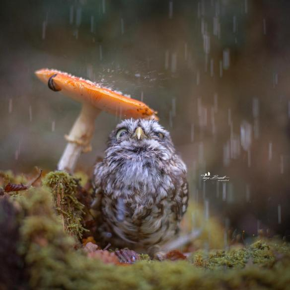 hiding-from-the-rain-photography-by-tanja-brandt