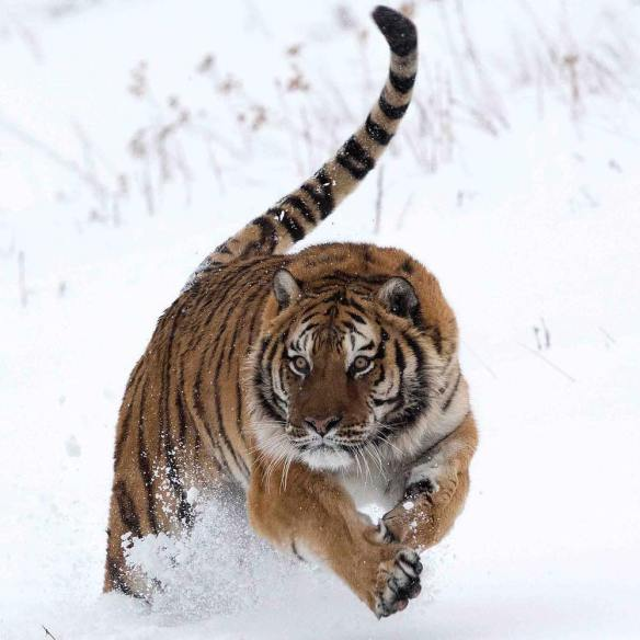 hunter-in-the-snow-photography-by-michel-zoghzoghi