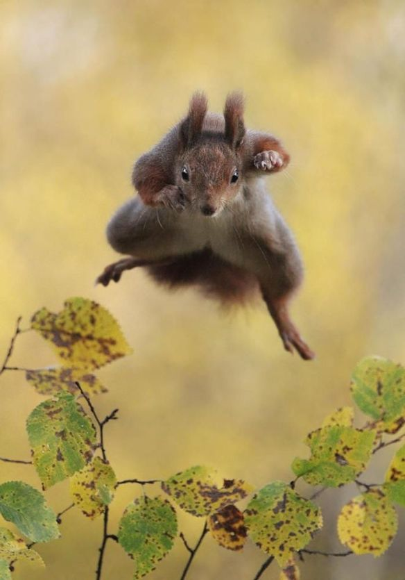 kungfu-squirrel-photography-by-julian-rad