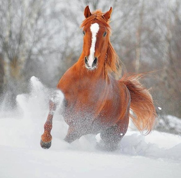 snowy-run-photography-by-olga-itina