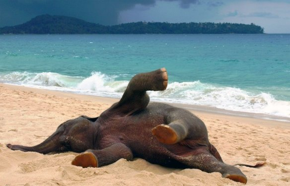 young-elephant-playing-at-the-beach-photography-by-john-lindie