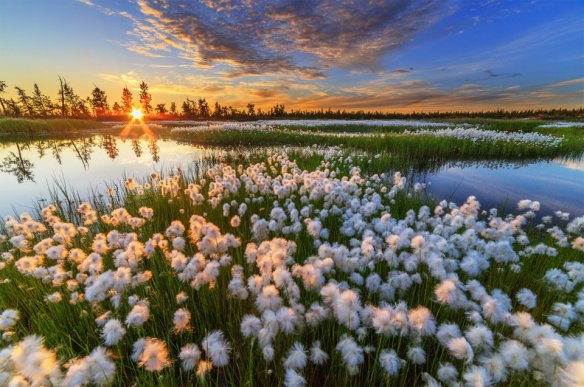 sunset-over-swamp-photography-by-camille-nureev