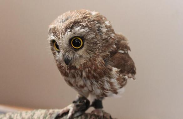 baby-owl-photography-by-mandi-stacie