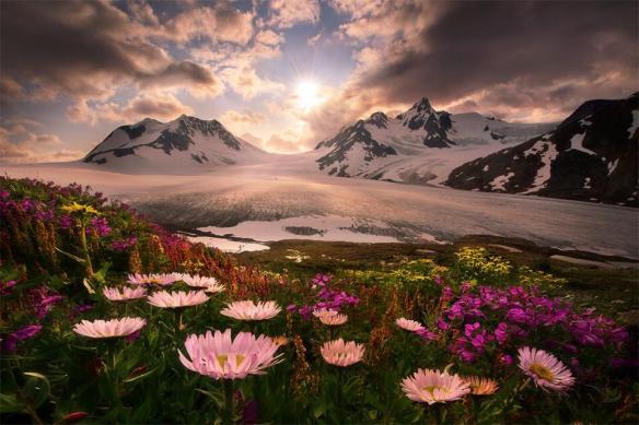 blooming-flowers-below-mountains-alaska-usa-photography-by-marc-adamus