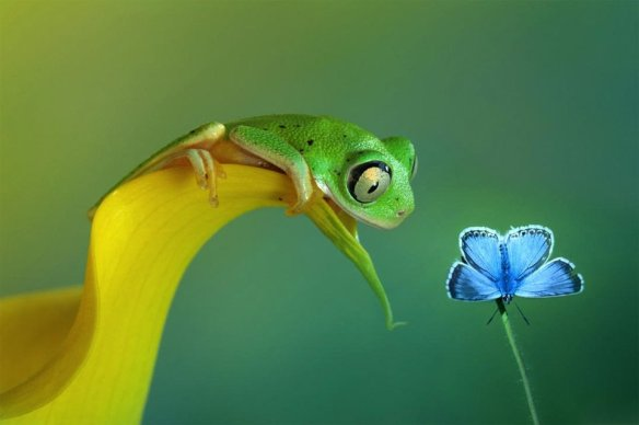 Frog And Butterfly Friendship | Photography by ©Wil Mifer