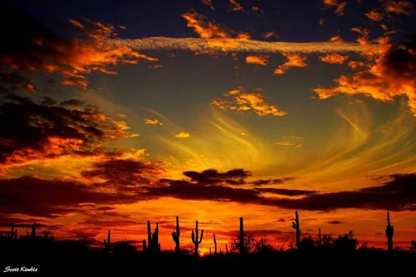 Gorgeous silhouette photo of #Tucson | Photography by ©Scott Kimble