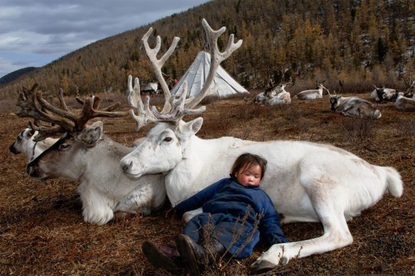 Living With Reindeer, Mongolia | Photography by ©Hamid Sardar-Afkhami