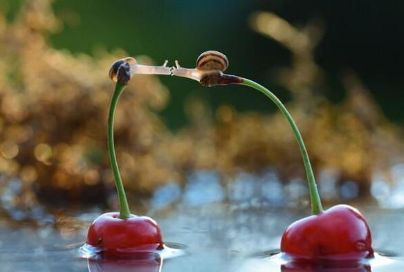 Snails Kiss on Cherries | Photography by ©Vyacheslav Mishchenko