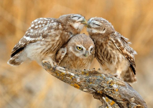 You Two Owls Should Get A Room | Photography by ©Vladimir Kogan