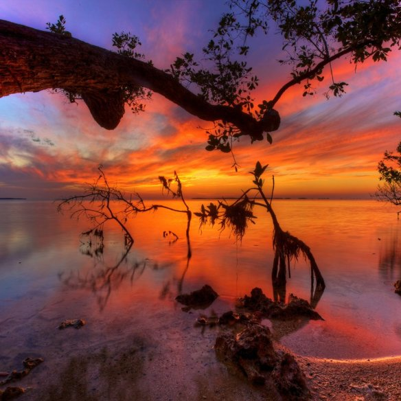 Mangroves at Sunset, Key Largo, Florida | Photography by ©Daniel Peckham