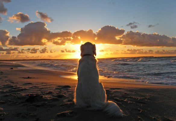 Dog Enjoys A Beautiful Sunset | Photography by ©Ingrid Brandt